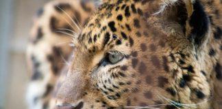 Big Five Animal Facts