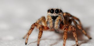 Facts About Spider